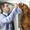 Doggonit, medical cannabis is not just for Snoop Dogg